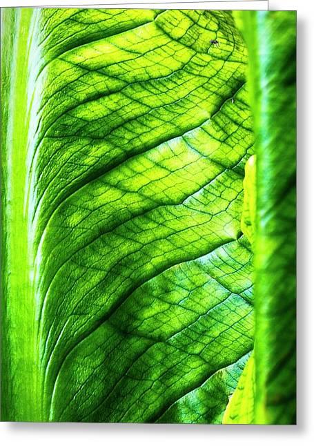 Chard Leaf Detail Greeting Card