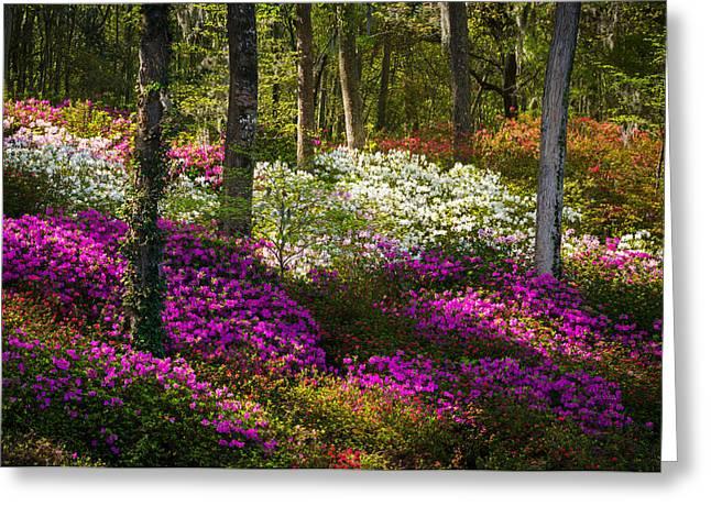 Charleston Sc Azalea Flowers And Sunlight - Fairytale Forest Greeting Card