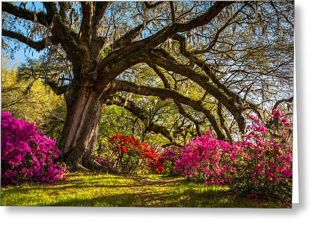 Charleston Sc Magnolia Plantation - Southern Hospitality Greeting Card by Dave Allen