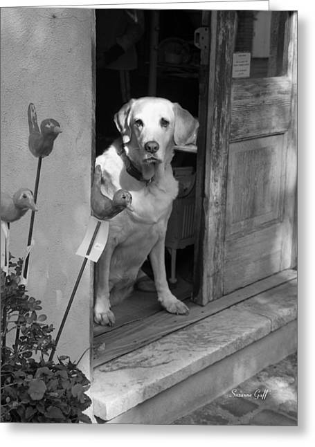 Charleston Shop Dog In Black And White Greeting Card by Suzanne Gaff