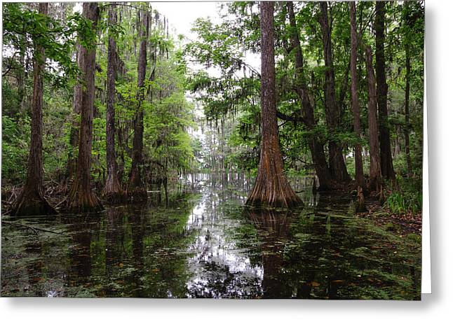 Charleston Swamp Greeting Card