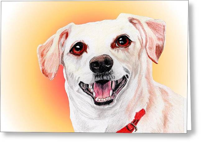 Charlie A Former Shelter Sweetie Greeting Card by Dave Anderson