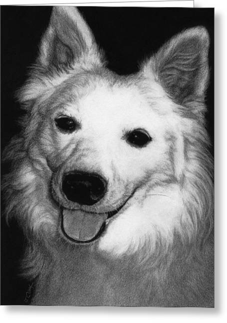 Charlie - American Eskimo Greeting Card
