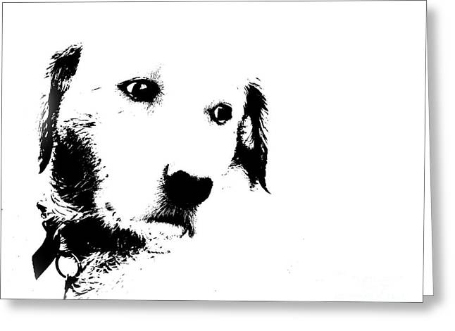 Charlie The Poser Labadoor Greeting Card by Jo Collins