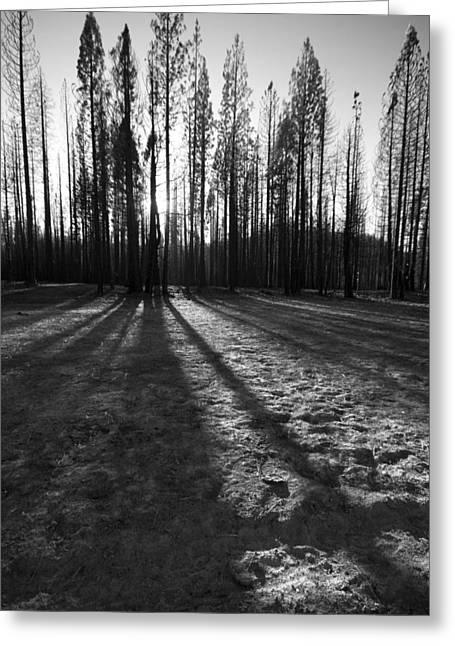 Charred Silence - Yosemite Rm Fire 2013 Greeting Card
