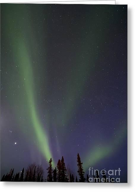 Chasing Lights Greeting Card by Priska Wettstein