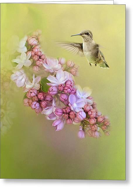Chasing Lilacs Greeting Card by Jai Johnson