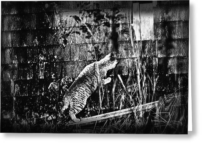 Chasing Shadows Greeting Card by Susan Capuano