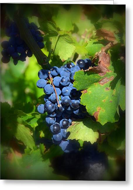 Chateauneuf Du Pape Hidden Treasure Greeting Card by Carla Parris