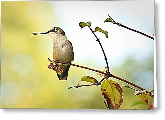Chatter Greeting Card by Tammy Schneider