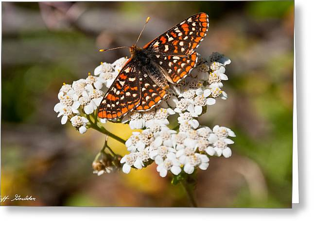 Greeting Card featuring the photograph Checkerspot Butterfly On A Yarrow Blossom by Jeff Goulden