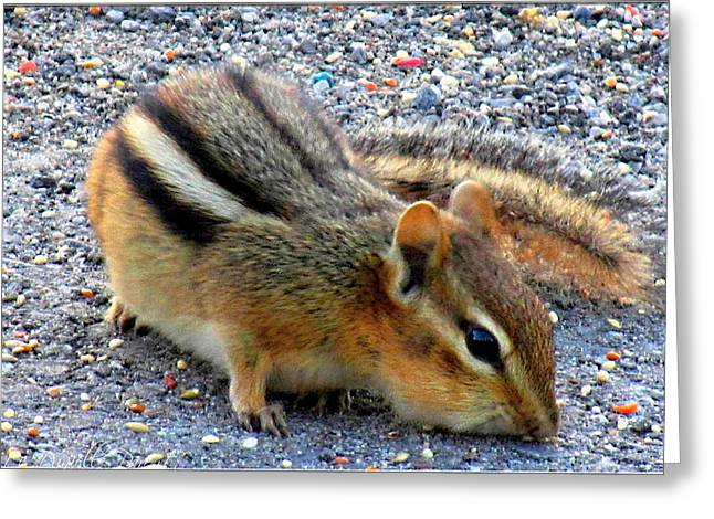 Cheeky Chipmunk Greeting Card by Danielle  Parent