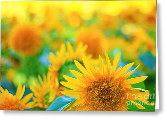 Cheerful And Happy Yellow Sunflower Field In Summer Greeting Card