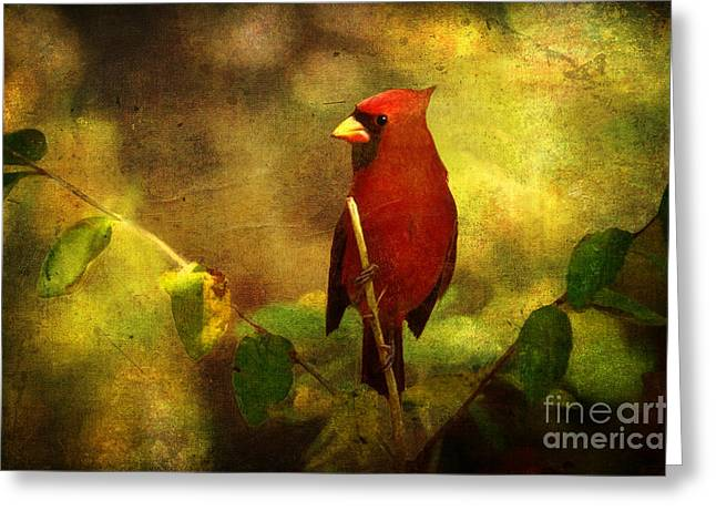 Cheery Red Cardinal  Greeting Card by Lianne Schneider