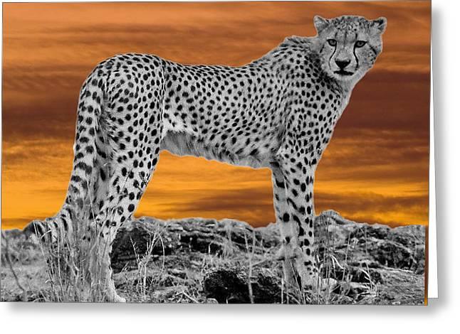 Cheetah At Dusk Greeting Card by Larry Linton