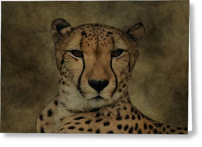 Cheetah Face Greeting Card