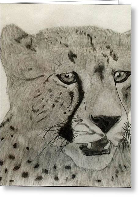 Cheetah II Greeting Card by Noah Burdett
