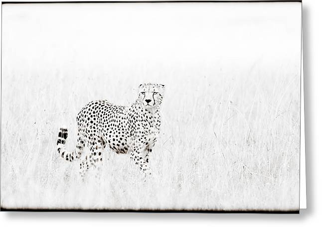 Cheetah In The Grass Greeting Card by Mike Gaudaur