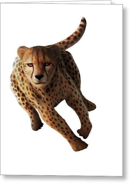 Cheetah Greeting Card by Mark Garlick
