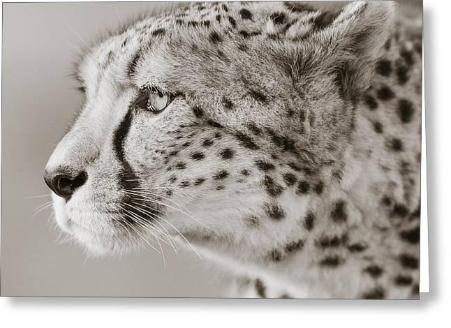 Cheetah Portrait Greeting Card by Regina Mueller