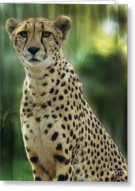 Cheetah Spots Greeting Card