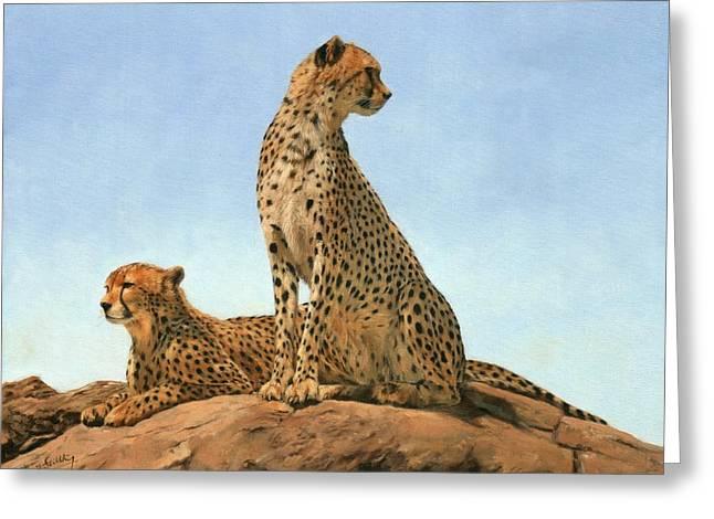 Cheetahs Greeting Card by David Stribbling