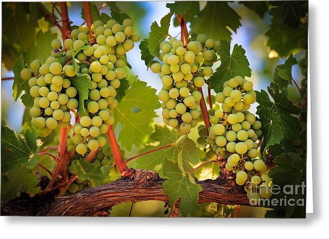 Chelan Grapevines Greeting Card