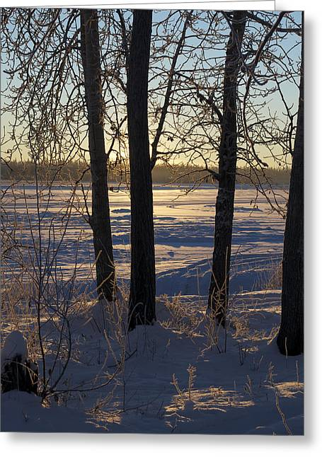 Chena River Trees Greeting Card