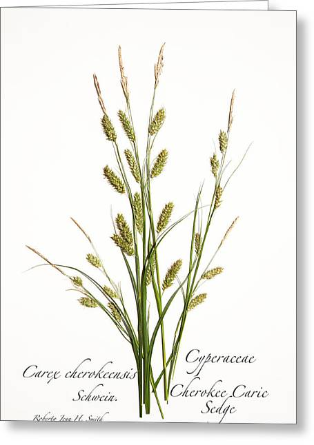 Cherokee Caric Sedge Greeting Card