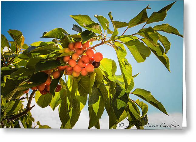 Cherries In The Sun Greeting Card by Marie  Cardona