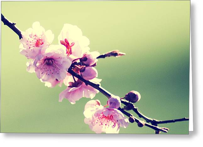 Greeting Card featuring the photograph Cherry Blooms by Yulia Kazansky