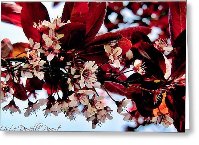 Cherry Blosoms 2 Greeting Card by Danielle  Parent