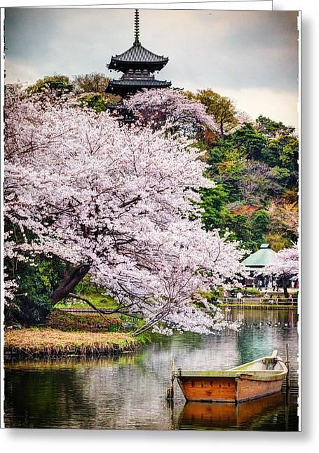 Cherry Blossom 2014 Greeting Card