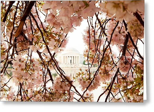 Cherry Blossom Flowers In Washington Dc Greeting Card by Susan Schmitz