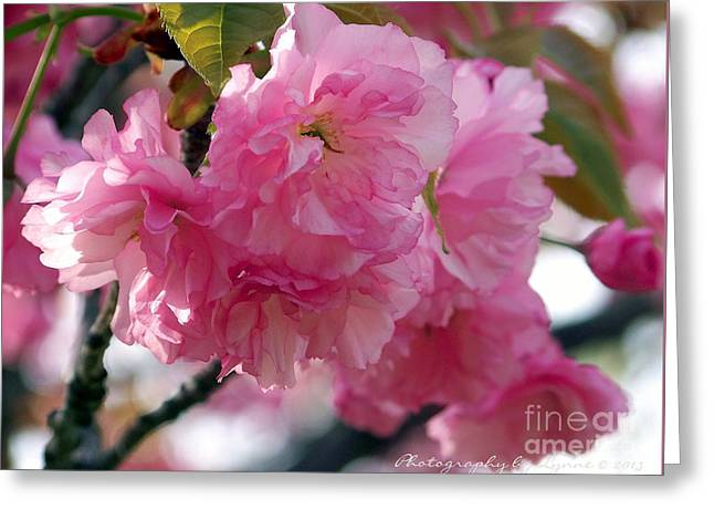 Greeting Card featuring the photograph Cherry Blossom by Gena Weiser