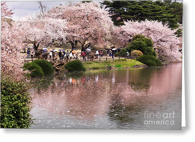 Cherry Blossom In Park In Tokyo Greeting Card