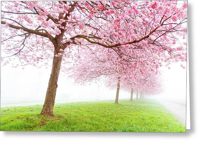 Cherry Blossom On Trees Greeting Card by Wladimir Bulgar