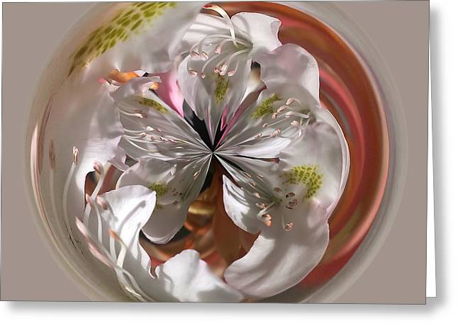 Cherry Blossom Orb Greeting Card