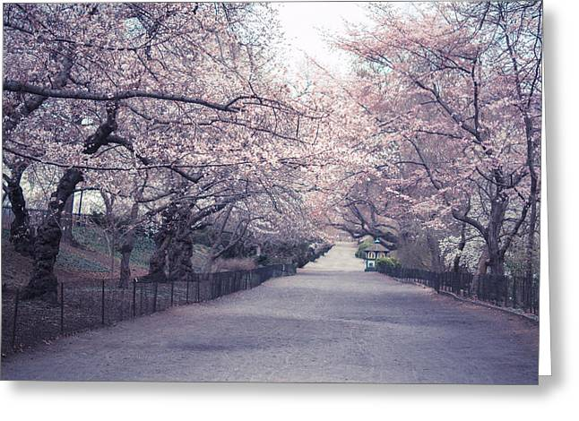 Cherry Blossom Path - Central Park Springtime Greeting Card