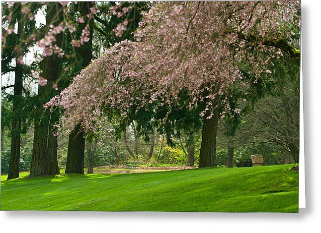 Greeting Card featuring the photograph Cherry Blossom by Sabine Edrissi