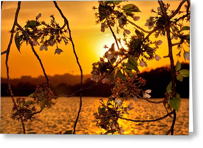 Greeting Card featuring the photograph Cherry Blossom Sunset by Mitchell R Grosky