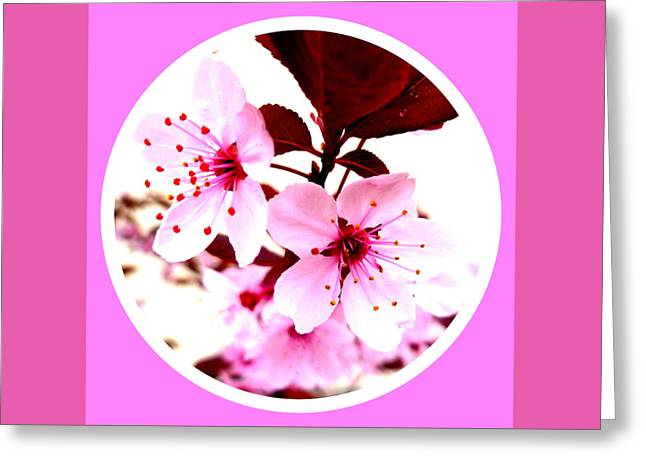 Cherry Blossom Greeting Card by The Creative Minds Art and Photography