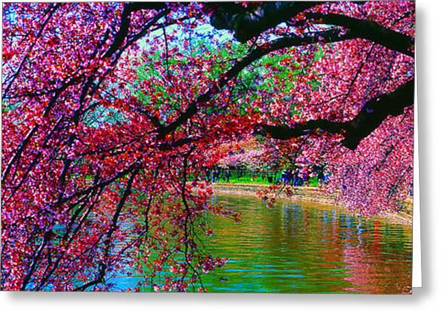 Cherry Blossom Walk Tidal Basin At 17th Street Greeting Card