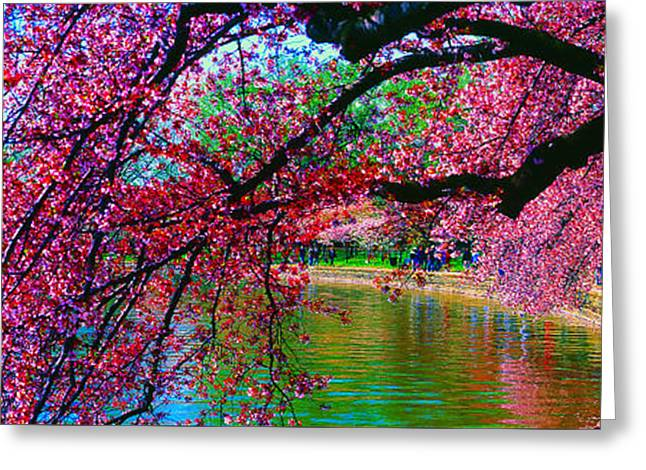 Cherry Blossom Walk Tidal Basin At 17th Street Greeting Card