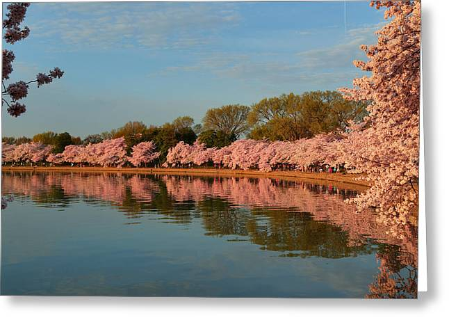 Cherry Blossoms 2013 - 001 Greeting Card by Metro DC Photography