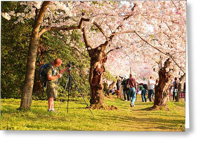 Cherry Blossoms 2013 - 009 Greeting Card by Metro DC Photography