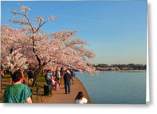 Cherry Blossoms 2013 - 010 Greeting Card by Metro DC Photography
