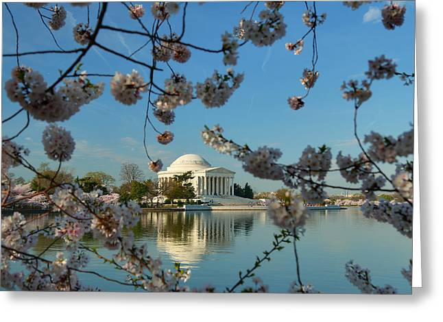 Cherry Blossoms 2013 - 039 Greeting Card by Metro DC Photography