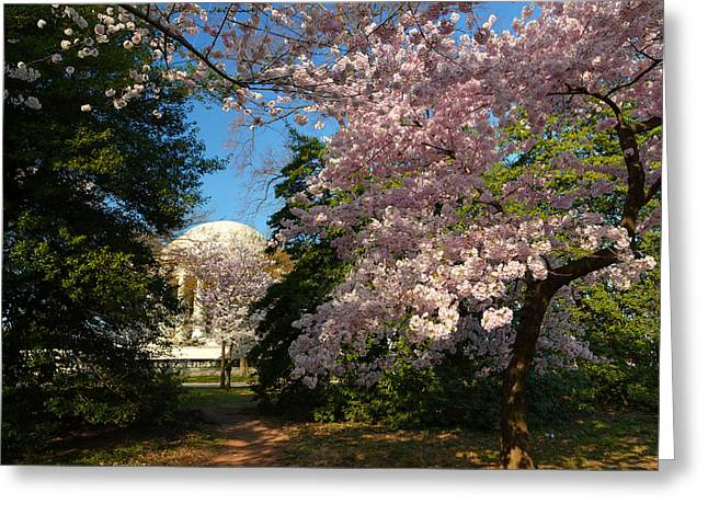 Cherry Blossoms 2013 - 047 Greeting Card by Metro DC Photography
