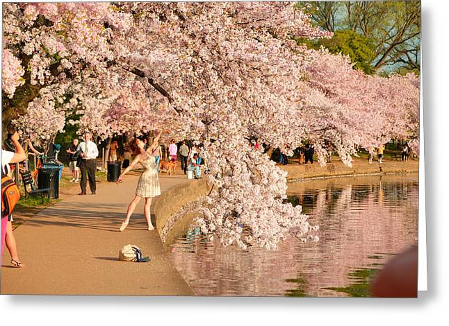Cherry Blossoms 2013 - 076 Greeting Card by Metro DC Photography